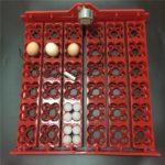 auto-egg-turner-tray-2