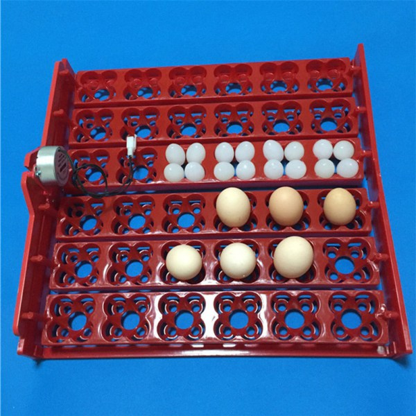 auto egg turner rack