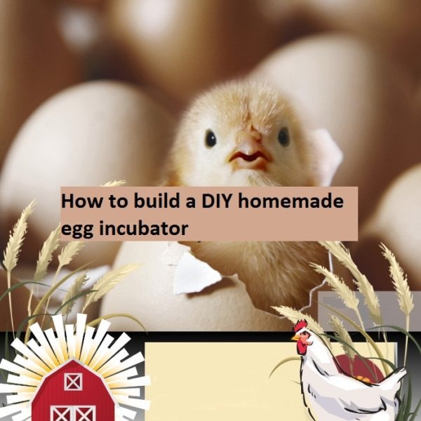 How to build a DIY Homemade egg incubator eBook pdf
