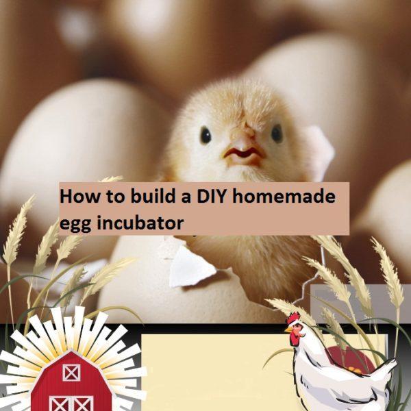 How to build a DIY Homemade egg incubator eBook pdf